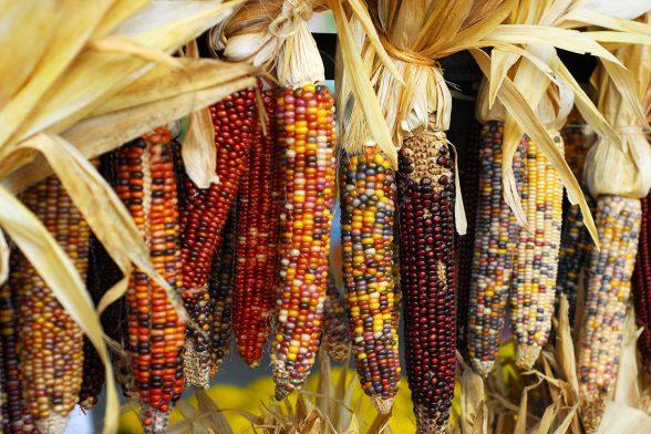 Hidden Nutrition Secrets of Our Ancestors