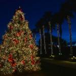 Savannah Christmas Tree