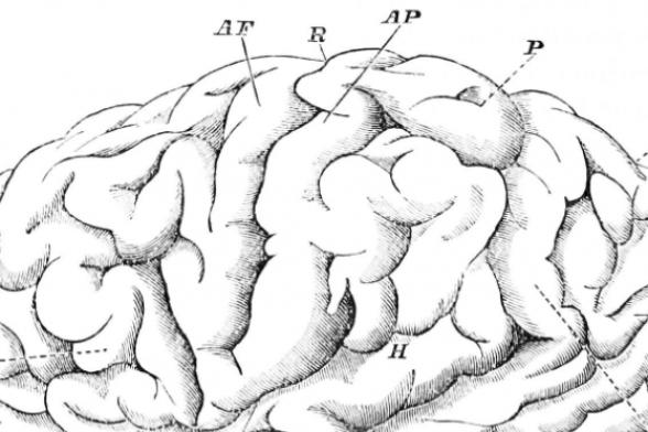 """""""Second Brain"""" Found in Stomach, Intestines, Colon"""