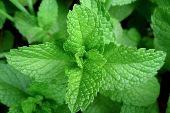 Natural Breath Fresheners