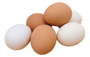 eggs are very nutritious