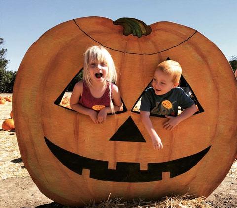 pumpkin patch photos