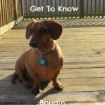 Getting To Know Boudin