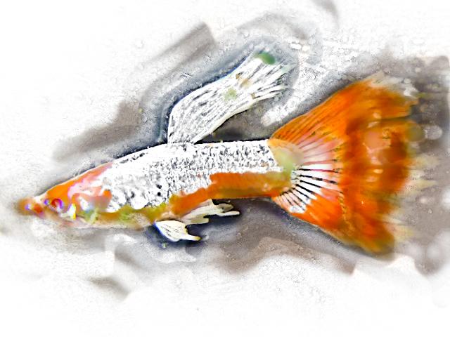 NEW Fishart Have a look!