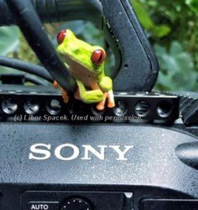 costa rica green tree frog camera
