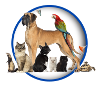 PawPrints Pet Sitters Pet Sitting