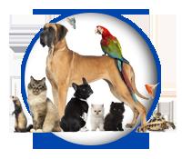PawPrints Pet Sitters Pet Sitting