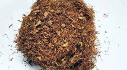 तंबाकू का इस्तेमाल किया जा रहा है 12 हजार साल से