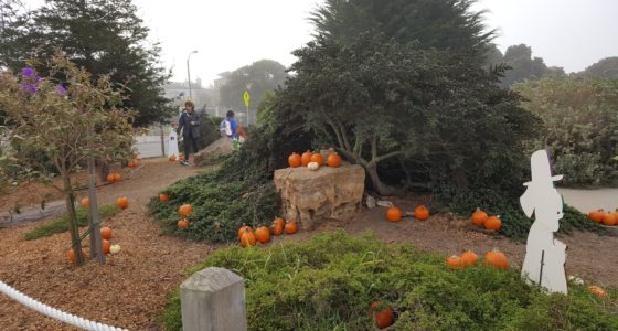 ANNUAL SLOAT PUMPKIN PATCH IS ON!