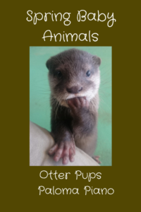Paloma Piano - Spring Baby Animals - Otter Pups