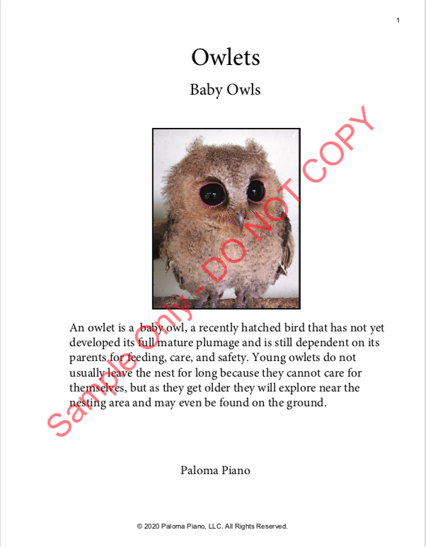 Paloma Piano - Spring Baby Animals - Owlets - Page 1