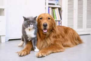 Pet dander in your air ducts
