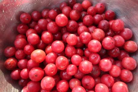 Prunus americana, American Plum fruit