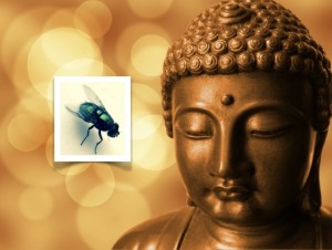 buddha fly_00001