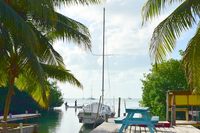 Mangrove forest adds to the Caye Caulker and attracts more birds and animals