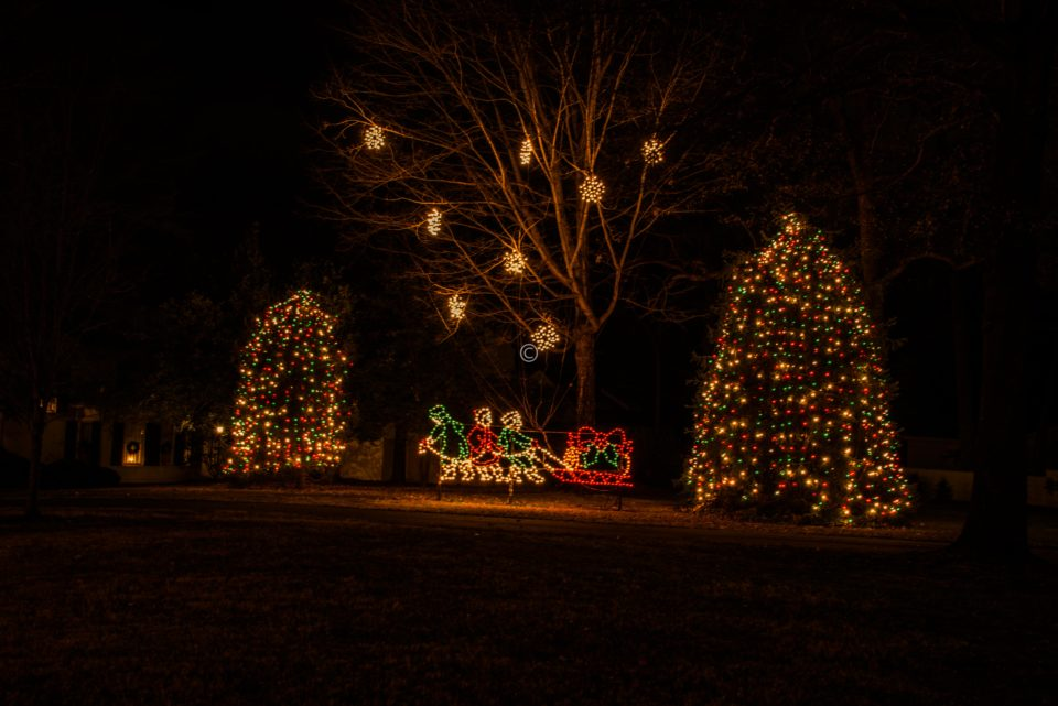 Trees decorated with Christmas lights in McAdenville