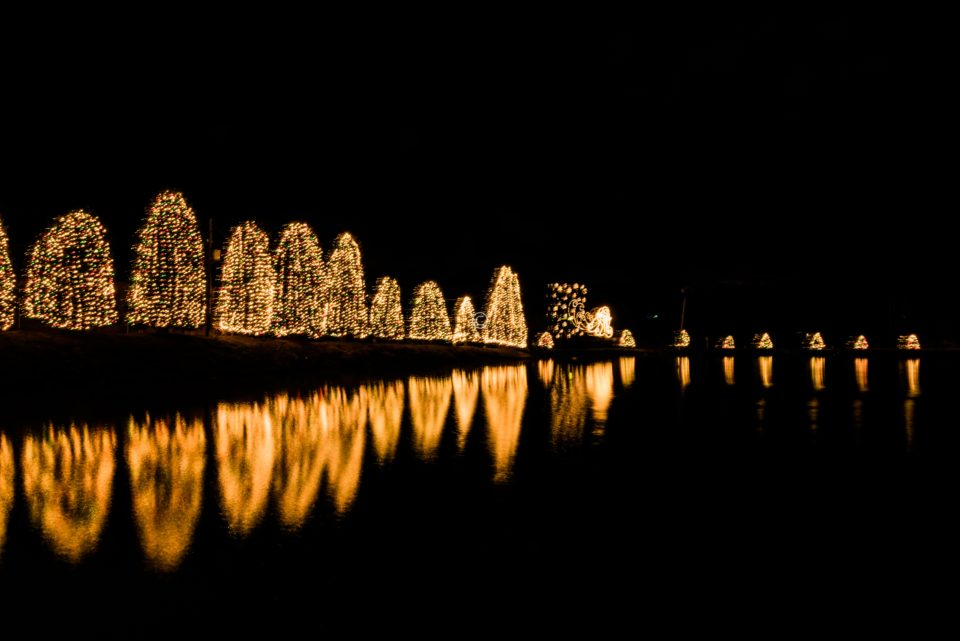 Pond Lit up with lights which turn on automatically at 5:30 pm everyday
