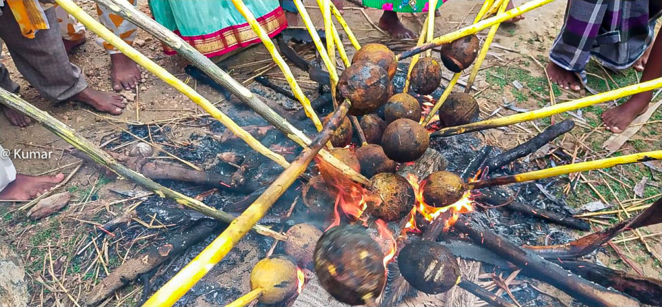 Fire Roasting of coconut