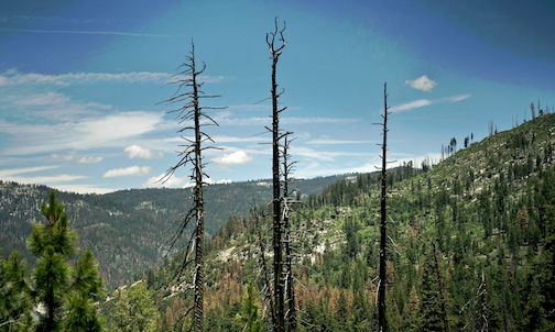 californiatrees