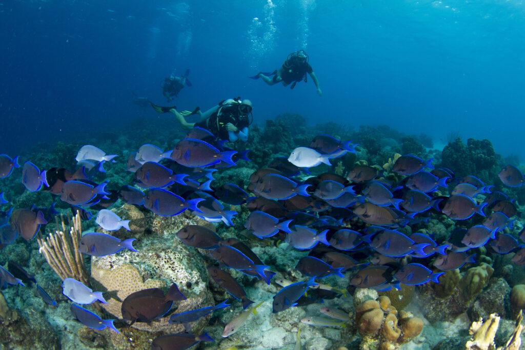 Dory Curacao