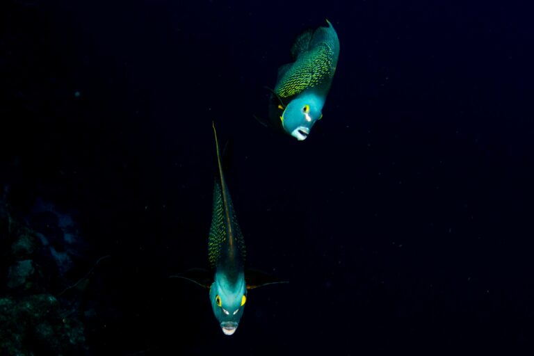Night Dive Curacao