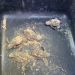 Weak baby turtles saved, waiting for sunset release