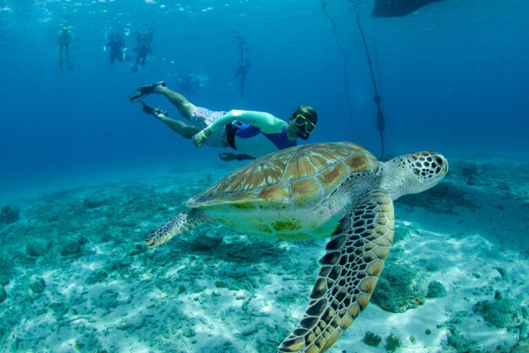 Blue C Turtle Curacao