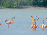 Zoutpannen flamingo
