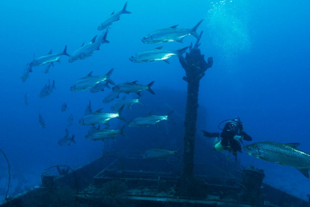 Wreck Curacao