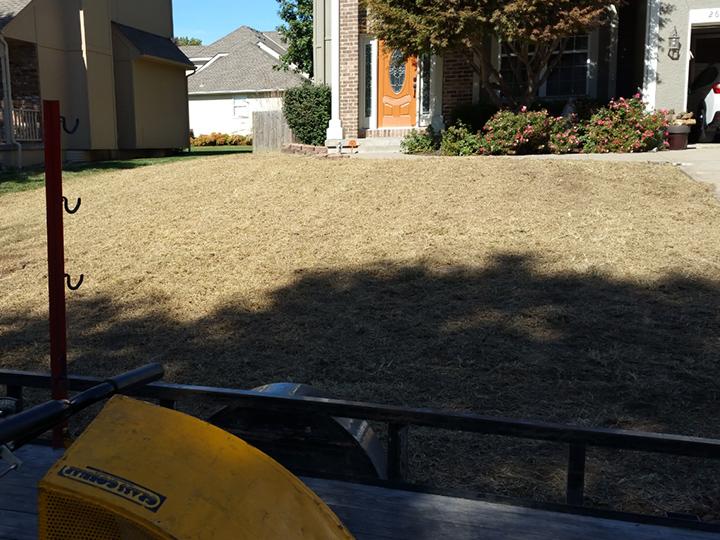 Lawn Renovations