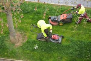 Professional Lawn Maintenance