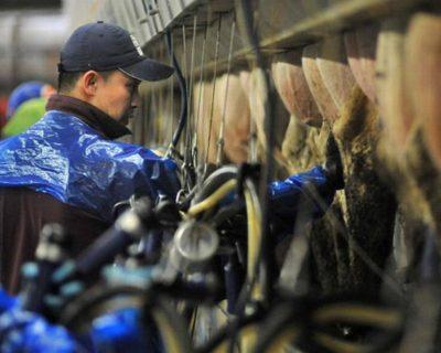 employee milking