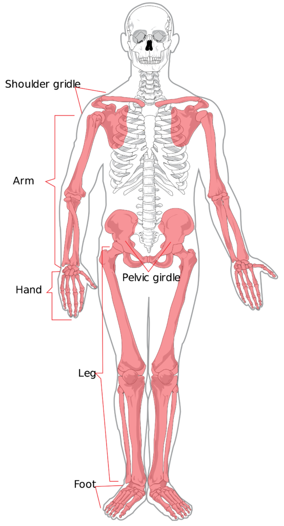 Understanding the Psoas: Muscle of the Soul