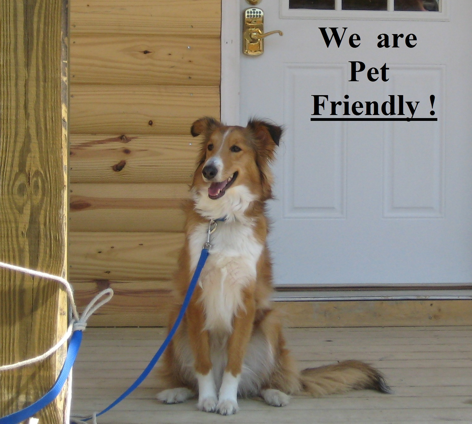 Happy Dog at New River Cabins West Virginia