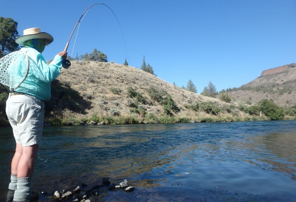A nice rainbow putting a good bend in the micro spey rod.