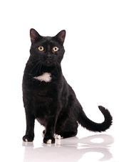 Black cats Angel Mark