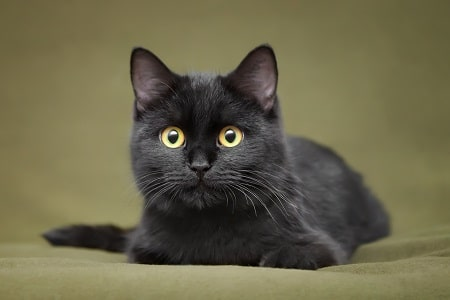 black cats superstition history