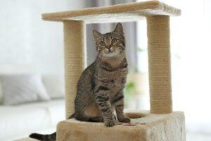 cat towers furniture