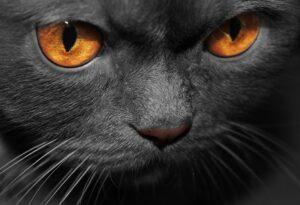 Cat legends worldwide