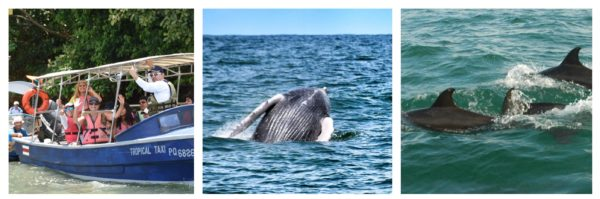 costa rica dolphin whale tours