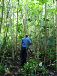 costa rica hiking jungle