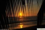Sunset through palm tree ballena national park