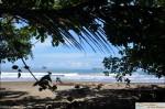 Beach trees at Ballena National Park