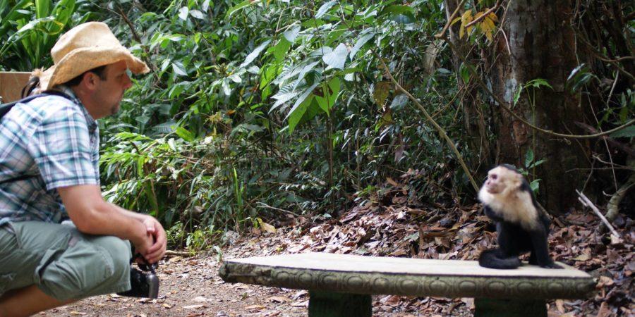 costa rica monkey manuel antonio bench