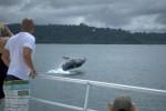 Whale watching boat uvita