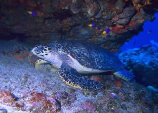 tortuguero national park turtle