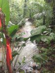 yoga retreat center boundary creek costa rica