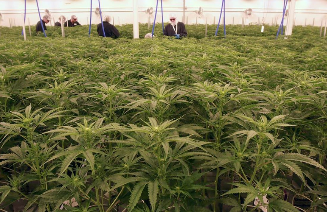 alberta-cannabis-producer-sundial-targeted-in-class-action-suit