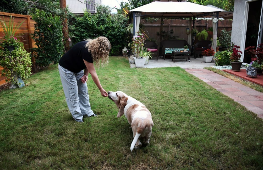 why-some-pet-owners-are-turning-to-cbd-to-treat-their-ailing-animals