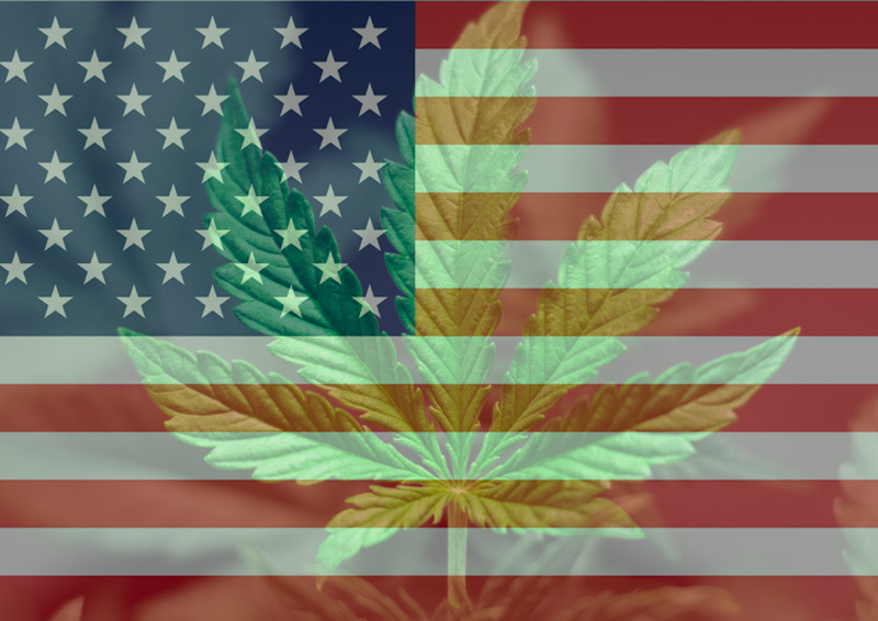Is CBD Legal in 2019? The Legal Status of CBD in 50 States